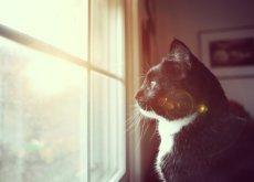 gato-es-sordo