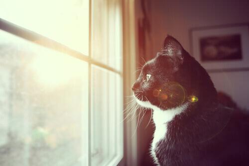 Descubra se o seu gato é surdo