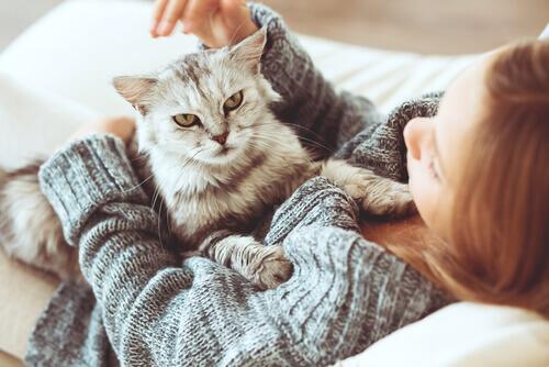 gatos-e-donos
