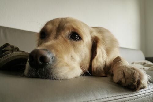 Instintos que seu cão deve satisfazer no lar