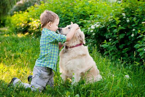 Seu filho precisa entender a linguagem corporal de seu cão