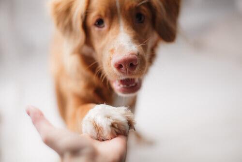 manter um cão