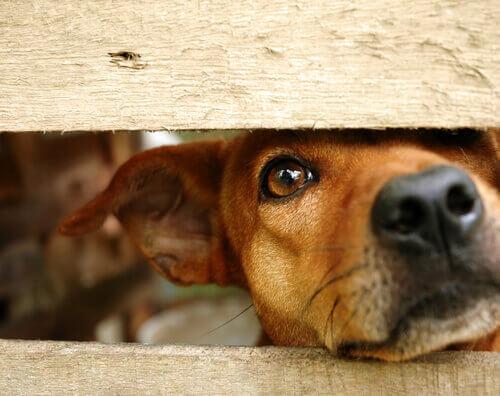 Como ajudar um animal maltratado a recuperar a confiança