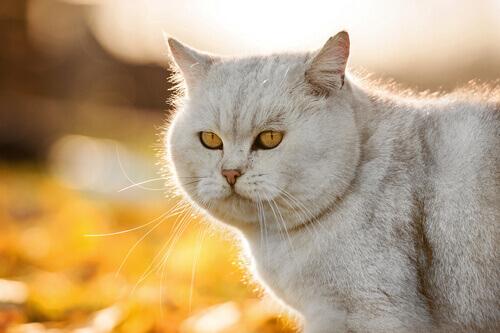 o-pelo-do-seu-gato-mais-brilhante