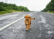 salvar a vida de um cão