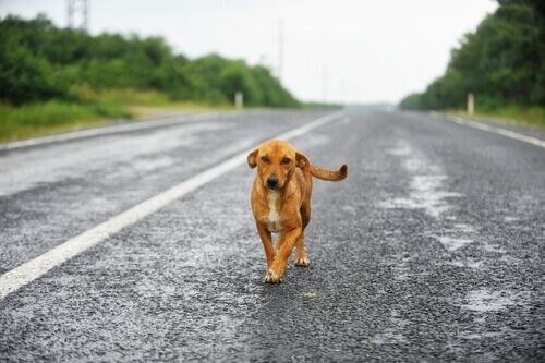 Um piloto uruguaio voou para salvar a vida de um cão
