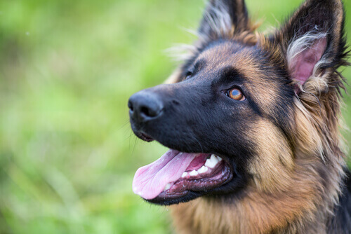 Potencialize a autoconfiança de seu cão