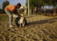 refugio-de- cães em gaza