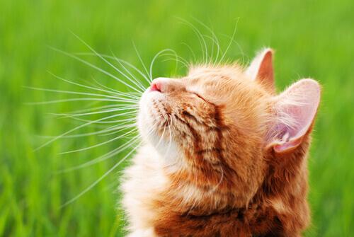 Os melhores repelentes caseiros para afastar os gatos