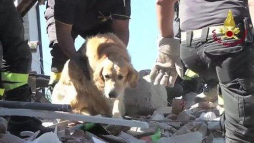 Resgataram um cão 9 dias depois de um terremoto