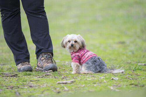O seu cachorro não vê os seus defeitos, você é perfeito para ele!