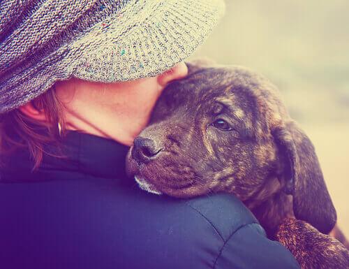 tratar um cão como bebê