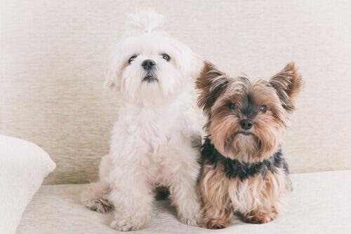 Realidade ou mito: um ano de um cão equivale a 7 dos humanos?