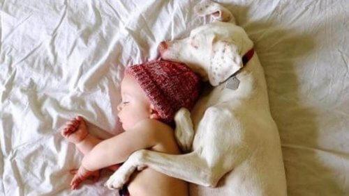 Uma cadelinha supera seu passado de maus-tratos graças a um bebê