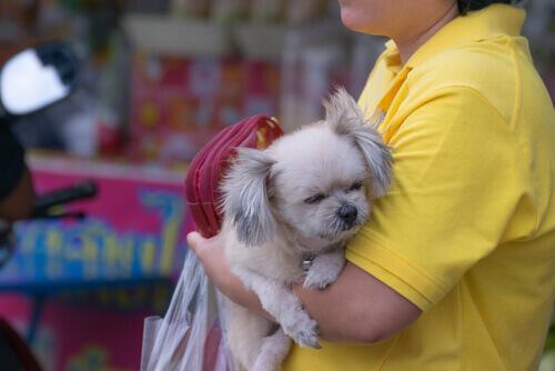 Primeira operação contra os locais de venda de cachorros em Caracas