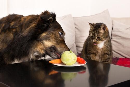 Frutas e verduras são geniais para seu animal de estimação