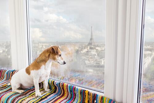 viajar com o seu cão
