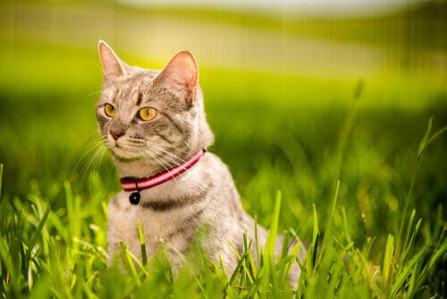 Como fortalecer o vínculo com o seu gato