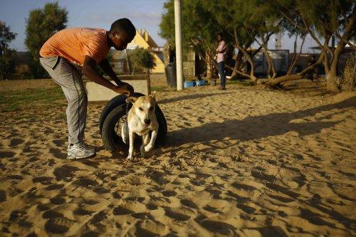 Voluntário em abrigo de animais