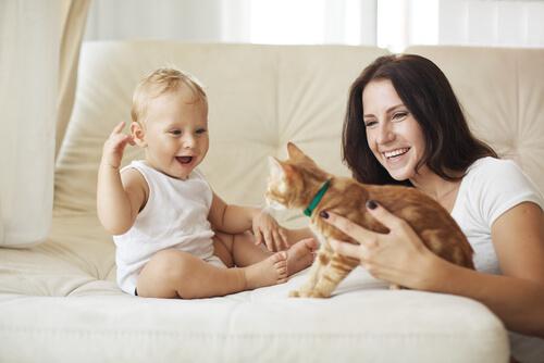 adotar-gato