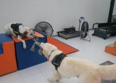 body-dog-2-e1476205391215