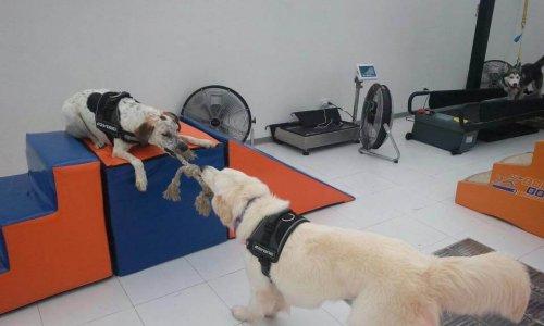 Body Dog, a primeira academia de ginástica para cachorros