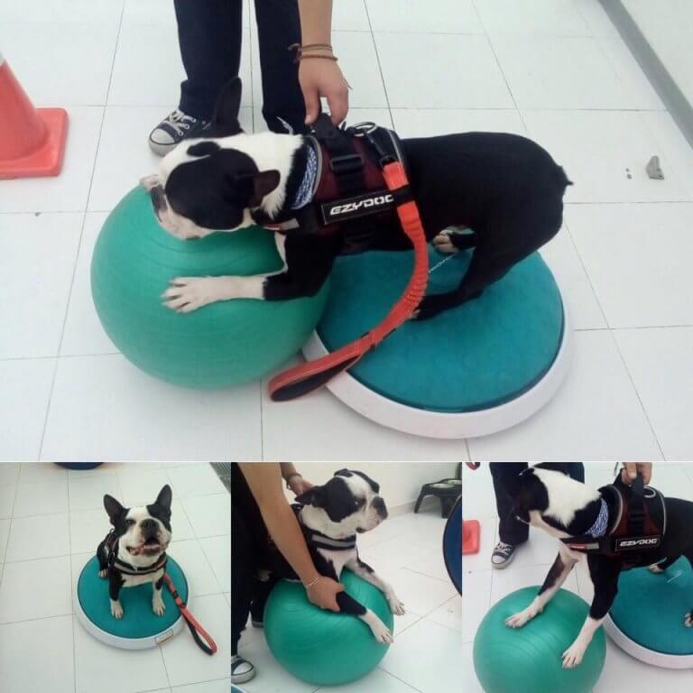 body-dog-768x768-1