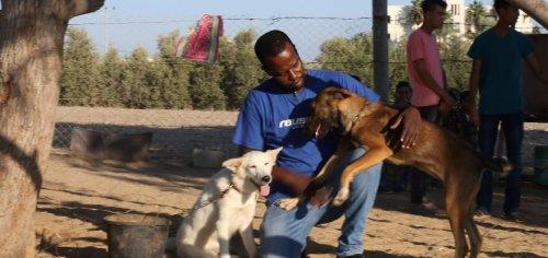 Cães de Gaza já têm um lugar onde viver
