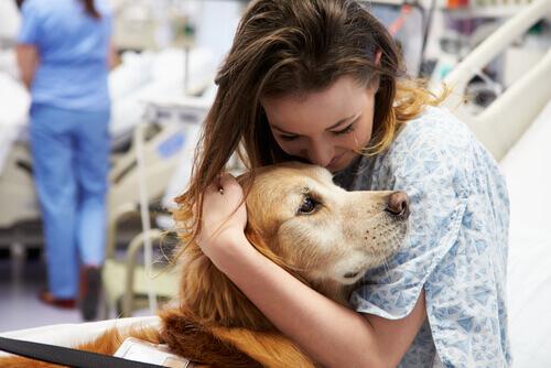 Cães enfermeiros
