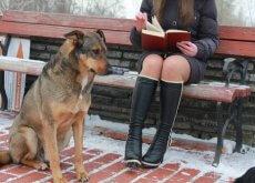 cães universitários