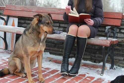 Conheça os cães universitários
