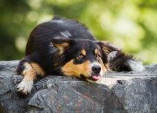 cachorro-e-calor