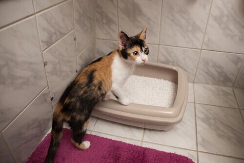 caixas de areia caseiras para gatos
