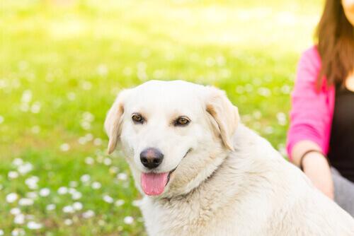 5 coisas que os cachorros não gostam