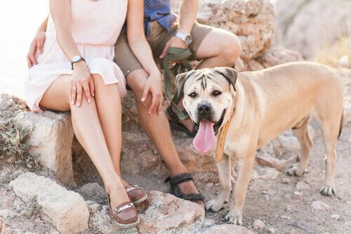 5 benefícios de conviver com cachorros