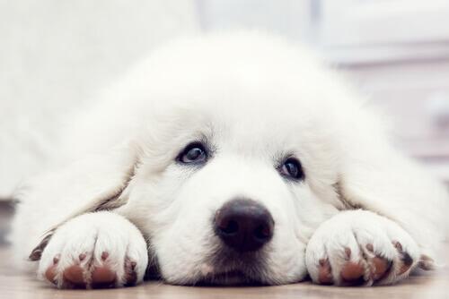 O curta-metragem de cães mostra o que um cão pode fazer para ser adotado