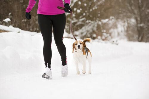Efeito Lassie: como o cachorro pode ajudar você a estar em forma