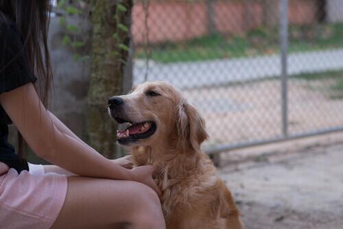 Os cachorros podem entender a linguagem humana?