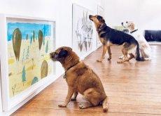 exposição para cães