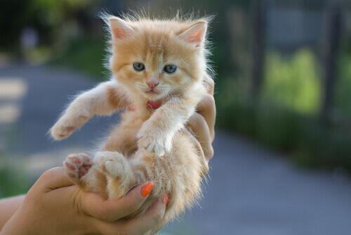 filhote-gato