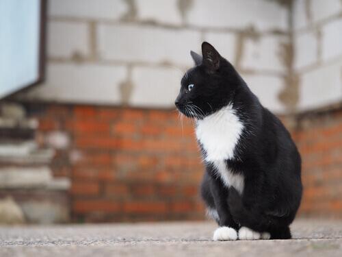 gato-de-rua