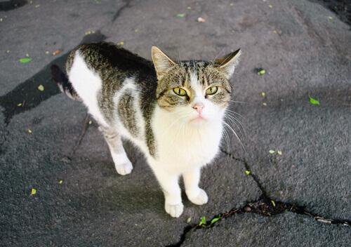 encontrar um gato abandonado