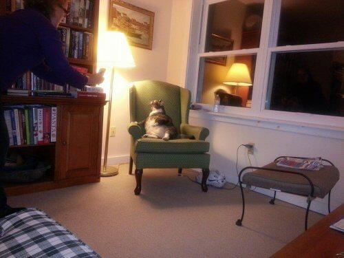 O gato mais gordo do mundo vive em um hotel