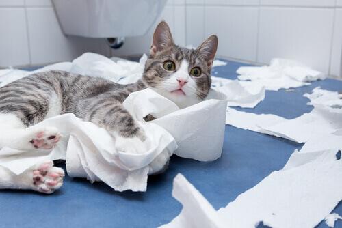 Por que os gatos adoram nos acompanhar quando vamos ao banheiro?