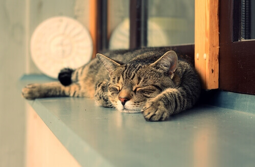 Por que os gatos dormem mais de dia do que à noite?