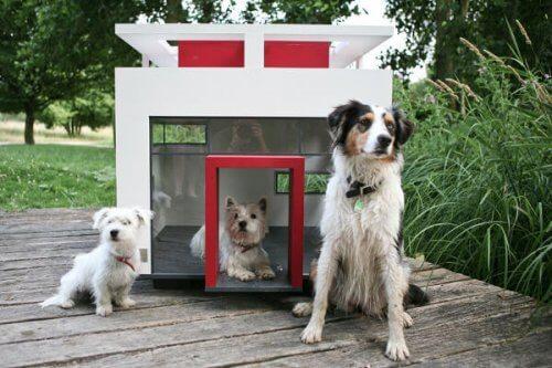 mansões para cães