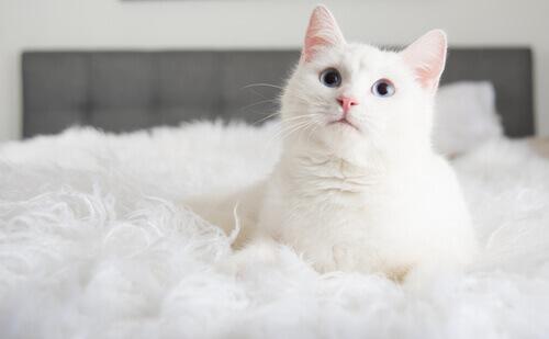 quando adota um gato