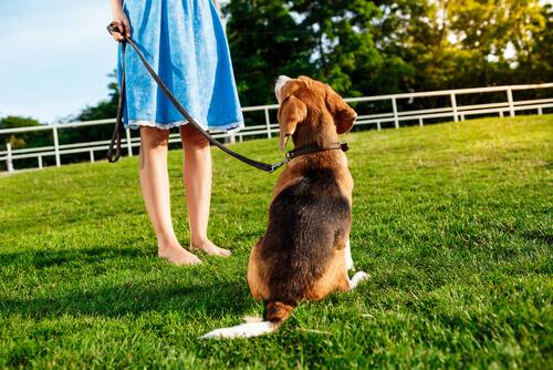 5 dicas para que o seu cachorro sempre atenda quando você o chama