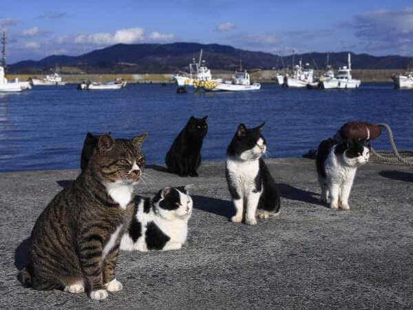 a-ilha-dos-gatos