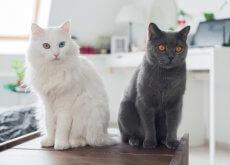 alergia-a-gatos